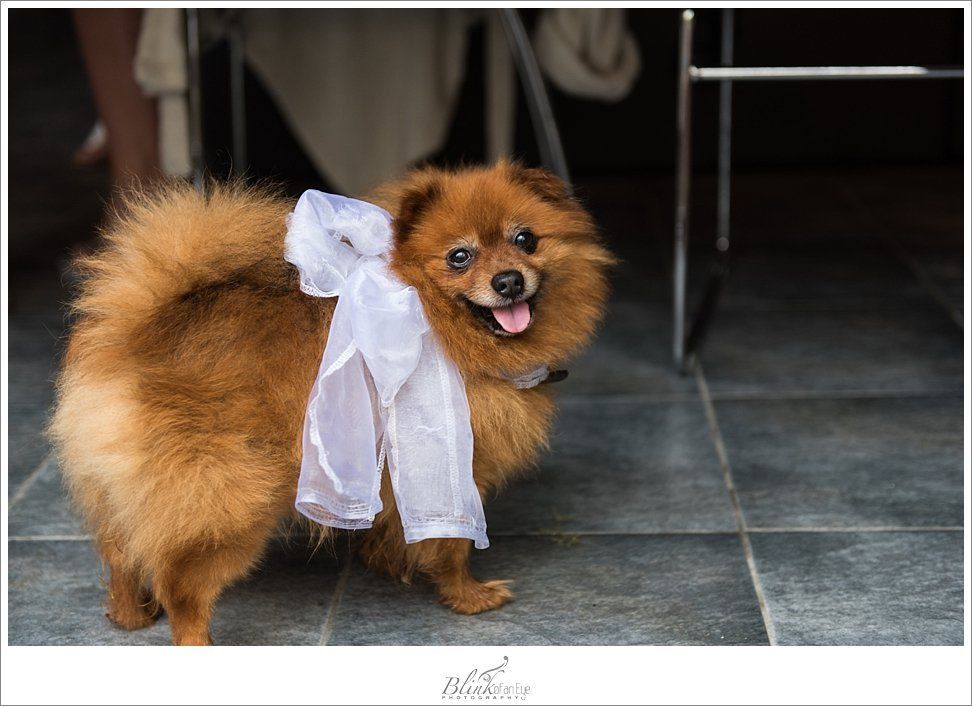 Dog becomes the wedding mascot in Delft.